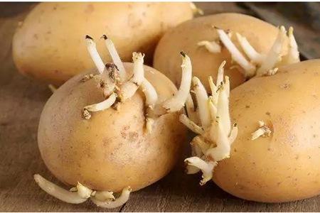 这种土豆发芽绝对不能吃,食用发芽土豆教你三招解毒方法