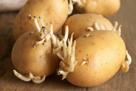 土豆发芽了还能吃吗?吃了发芽的土豆是否会中毒