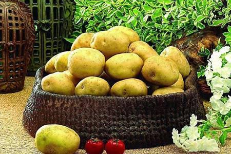 土豆发芽了还能吃吗