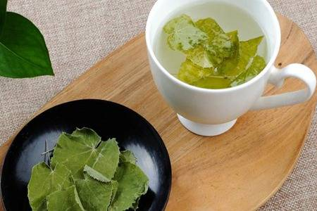 香藿能用来治疗口臭吗 唇形科草本植物广藿香功效与作用揭秘