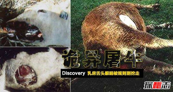 外星人真的为了DNA研究宰杀了牛吗(美国骗局)