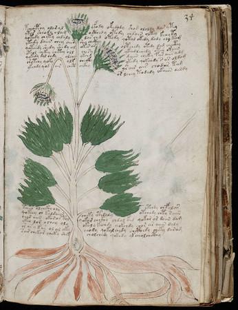 神秘书籍《伏尼契》手稿被复制 售价约6万元