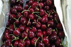 樱桃和樱桃的区别可以从颜色上看出来