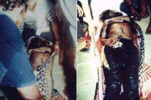 恐怖吞蛇事件 惊见好友在巨蟒肚子里(图片)