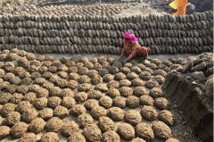 印度人为什么吃牛粪饼?新鲜牛粪手工制作成网站爆款产品