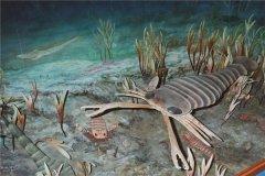 板足鲎:一种已经灭绝的节肢动物(四亿年前)