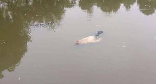 醉汉坠湖漂一夜 被救后称梦见视察洪水