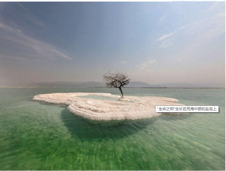 """""""生命之树""""生长在死海中部的盐岛上"""