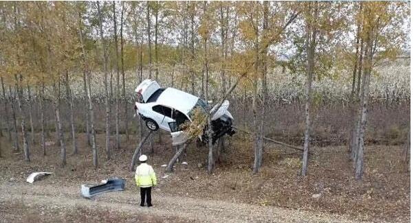 谁这么牛把车开到树上去了? 一般人真做不到