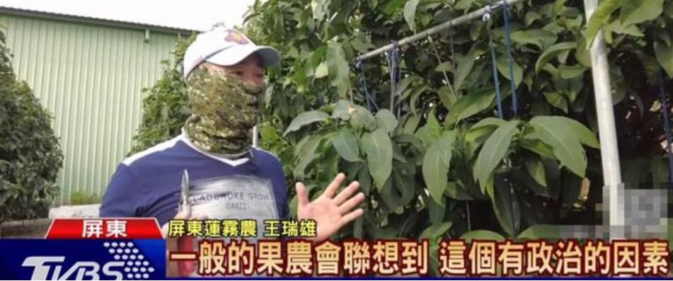 """把不好的水果卖给大陆?台""""绿委""""承认了"""