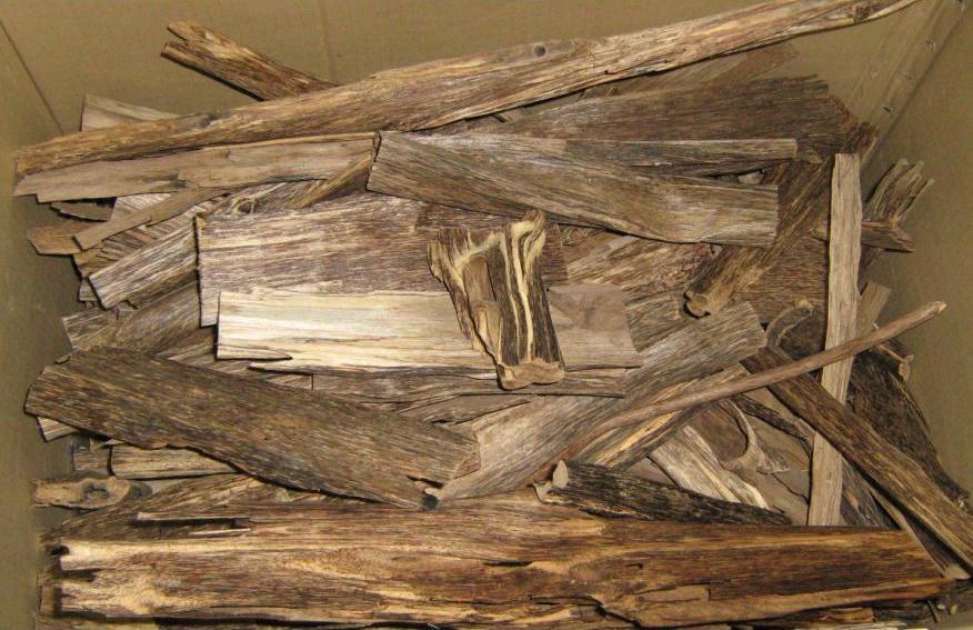 迄今为止地球上最昂贵的木材